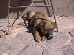 One of a thousand sleepy dogs in Argentina