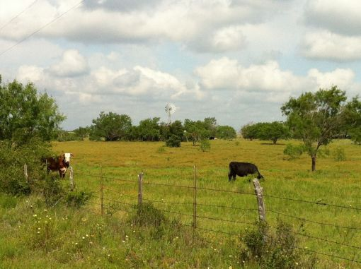 A favorite windmill spot that just happened to have cows in the foreground for a change.