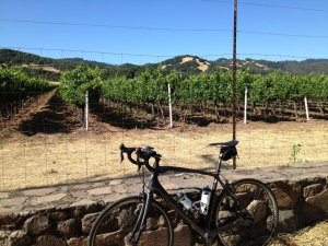 Sonoma Cycling and Vines
